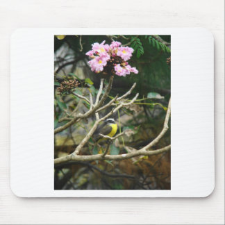 Banana-Quit Bird In Tree Mouse Pad