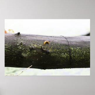 banana-slugs-2012-05-27 póster