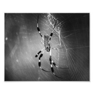 Banana Spider on Web - B&W Photograph