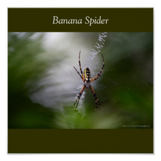 Banana Spider w-sig, Banana Spider Poster