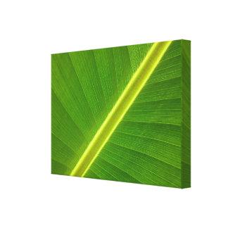 Banana Tree Leaf Premium Wrapped Canvas Gloss