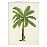 Banana Tree Pen and Ink Cards
