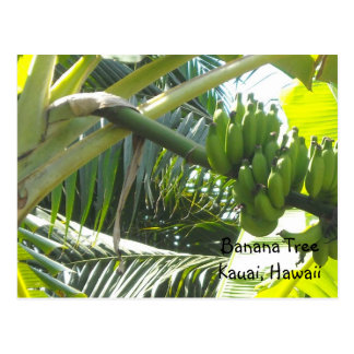 Banana Tree Postcard