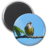 Bananaquit Bird and Blue Sky Photography 2 Inch Round Magnet