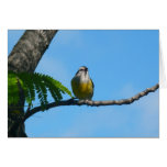 Bananaquit Bird and Blue Sky Photography Card