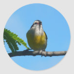 Bananaquit Bird and Blue Sky Photography Classic Round Sticker