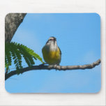 Bananaquit Bird and Blue Sky Photography Mouse Pad