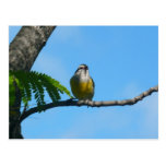 Bananaquit Bird and Blue Sky Photography Postcard