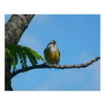 Bananaquit Bird and Blue Sky Photography Poster