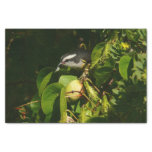"""Bananaquit Bird Eating Tropical Nature Photography 10"""" X 15"""" Tissue Paper"""