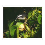 Bananaquit Bird Eating Tropical Nature Photography Canvas Print