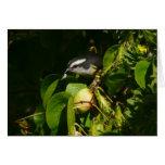 Bananaquit Bird Eating Tropical Nature Photography Card