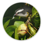 Bananaquit Bird Eating Tropical Nature Photography Ceramic Knob