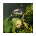 Bananaquit Bird Eating Tropical Nature Photography Ceramic Tile
