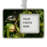 Bananaquit Bird Eating Tropical Nature Photography Christmas Ornament