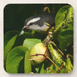 Bananaquit Bird Eating Tropical Nature Photography Drink Coaster