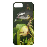 Bananaquit Bird Eating Tropical Nature Photography iPhone 8/7 Case