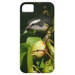 Bananaquit Bird Eating Tropical Nature Photography iPhone SE/5/5s Case