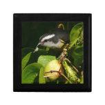 Bananaquit Bird Eating Tropical Nature Photography Keepsake Box