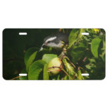 Bananaquit Bird Eating Tropical Nature Photography License Plate