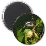 Bananaquit Bird Eating Tropical Nature Photography Magnet