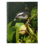 Bananaquit Bird Eating Tropical Nature Photography Notebook