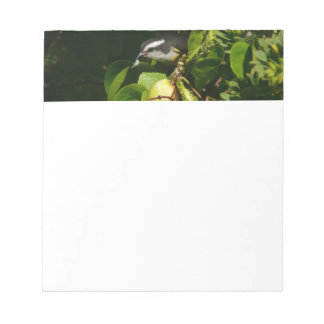Bananaquit Bird Eating Tropical Nature Photography Notepad