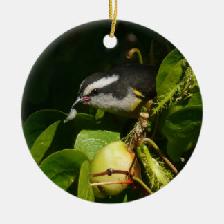 Bananaquit Bird Eating Tropical Nature Photography Double-Sided Ceramic Round Christmas Ornament