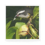 Bananaquit Bird Eating Tropical Nature Photography Paper Napkin