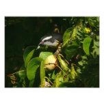 Bananaquit Bird Eating Tropical Nature Photography Photo Print