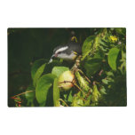 Bananaquit Bird Eating Tropical Nature Photography Placemat