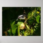 Bananaquit Bird Eating Tropical Nature Photography Poster