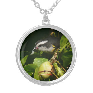 Bananaquit Bird Eating Tropical Nature Photography Round Pendant Necklace