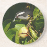 Bananaquit Bird Eating Tropical Nature Photography Sandstone Coaster