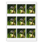 Bananaquit Bird Eating Tropical Nature Photography Temporary Tattoos