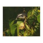 Bananaquit Bird Eating Tropical Nature Photography Wood Wall Decor