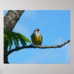Bananaquit Bird Print