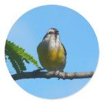 Bananaquit Bird Sticker