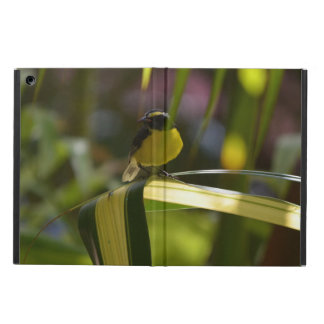 Bananaquit Case For iPad Air