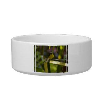 Bananaquit Cat Food Bowl