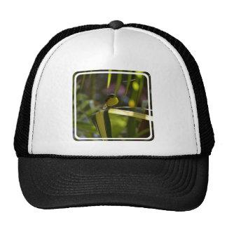 Bananaquit Trucker Hat