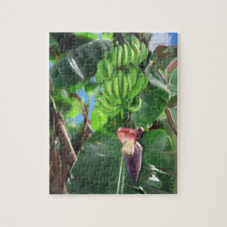 Bananas in the Plant Puzzle