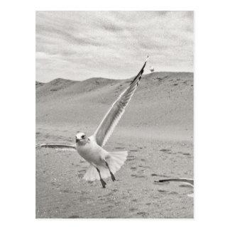Banco de arena de la extensión de las alas de postales