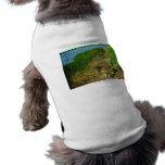 Banco de la charca con las plantas de la charca ropa perro