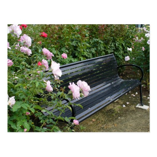 Banco en los rosas postal