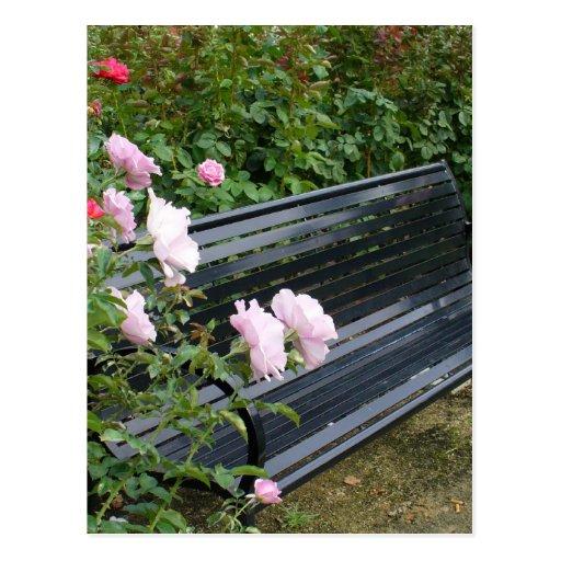 Banco en los rosas postales