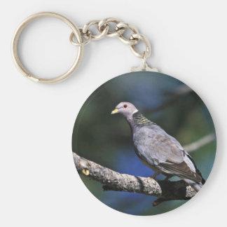Band-tailed Pigeon Keychain