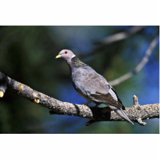 Band-tailed Pigeon Photo Sculptures