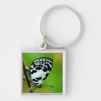 Banded Blue Pierrot Butterfly Keychains