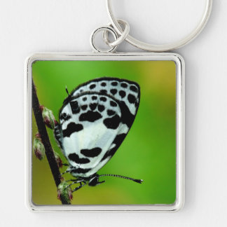 Banded Blue Pierrot Butterfly Key Chains
